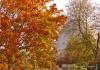 Atomei im Herbst